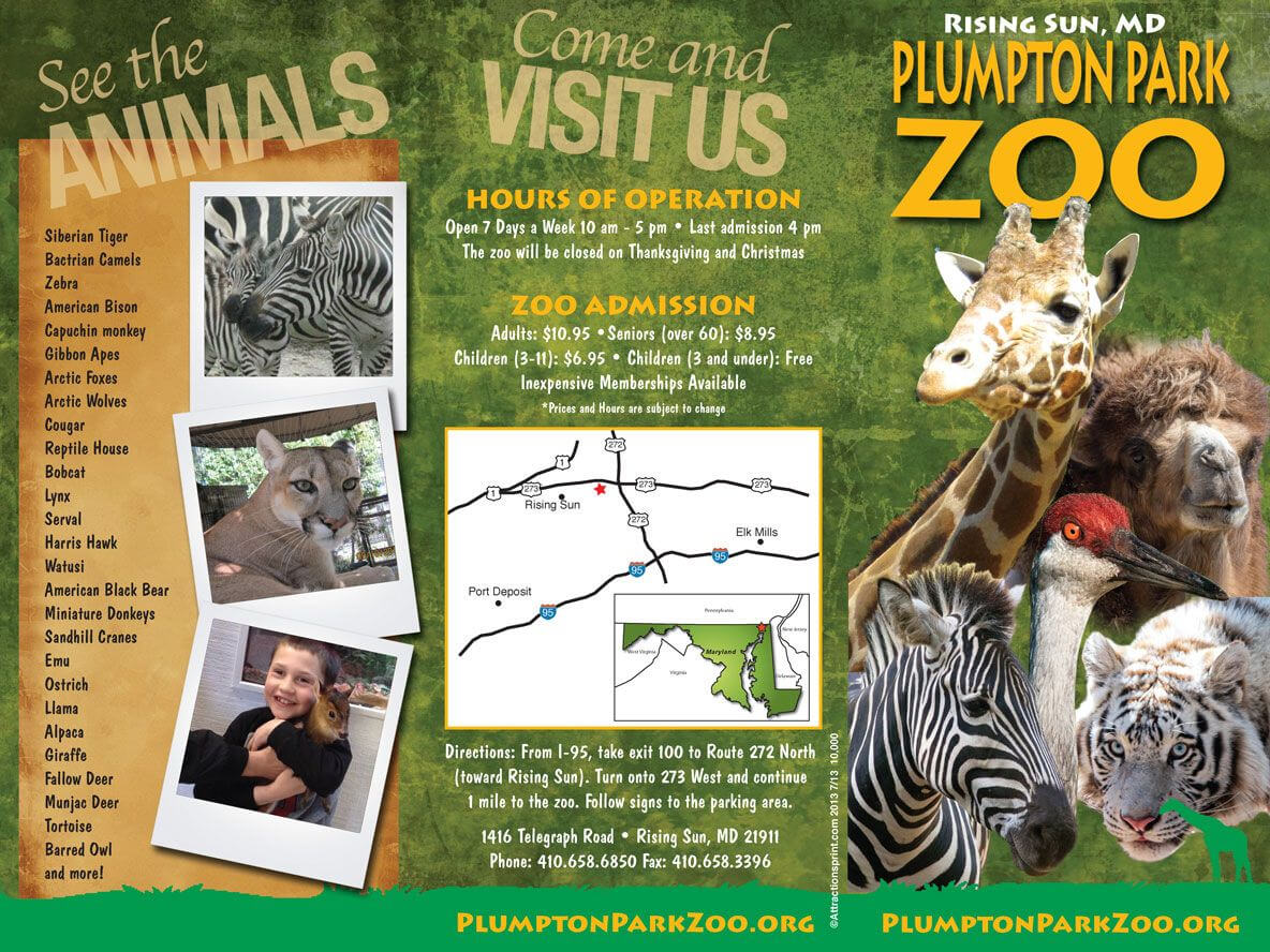 Zoo Brochure - Google Search | Zoo Tickets, Brochure Pertaining To Zoo Brochure Template